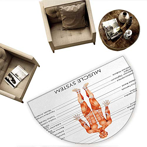 Human Anatomy Semicircle Doormat Muscle System Diagram for sale  Delivered anywhere in USA