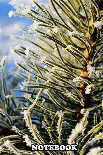 Notebook: Frost Pine Tree Covered With Hoar , Journal for Writing, College Ruled Size 6