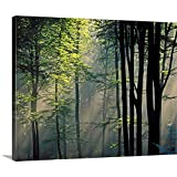 Gallery-Wrapped Canvas Entitled Sunlight Fog in Forest Great Big Canvas 14''x11''