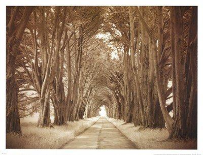 Cypresses by Alan Klug – 25.5 X 19.5インチ – アートプリントポスター LE_592572  Unframed Print B01NAAZ3DF