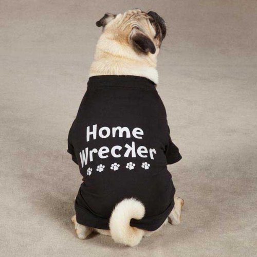 Casual Canine ZM3567 12 17 Home Wrecker Tee for Dogs, Small, Black