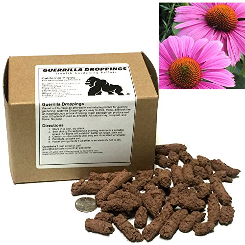 (Purple Coneflower Guerrilla Droppings - Seed Pellets for Guerrilla Gardening (Echinacea purpurea))