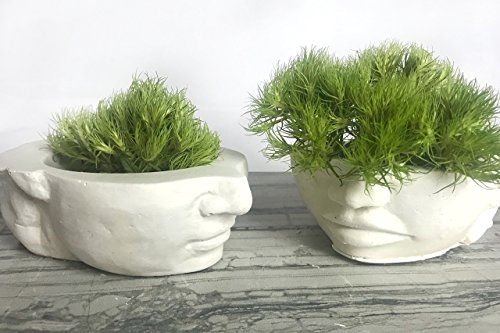 "Succulent Planter set of 2. Home Sculpture, Candle Holder or Head Vase. Handmade & eco-friendly - YOURS"" HIS&HERS Eco-Plaster planter (Eco Friendly Vases)"
