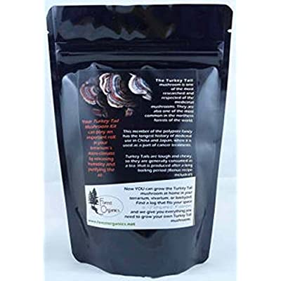 Forest Organics Turkey Tail Mushroom Growing Kit For Terrariums Medicinal Tea Gorws For Years!! : Garden & Outdoor
