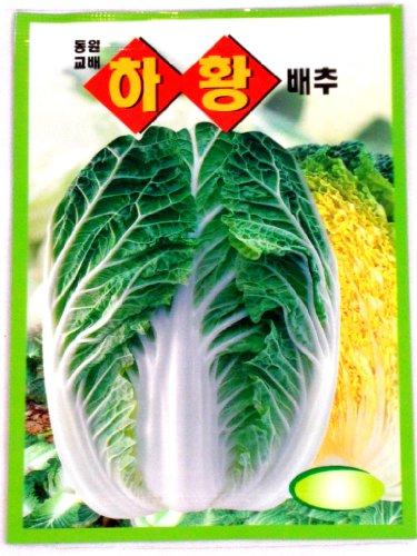 Cabbge Seeds Korean. 2 Pack(4grams-each)