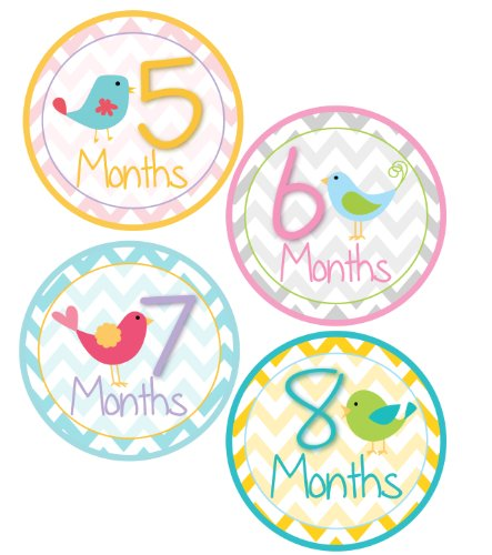 Amazon.com: Baby Girl Bird Monthly Onesie Sticker with Chevron Pattern -  Waterproof and Durable - Includes 1-12 Month Stickers: Baby