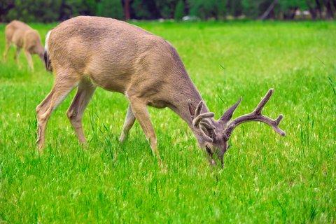 5 Lb Sugar Beet Food Plot 50,000 Seeds Bulk Excellent Deer Food Plot by OrOlam (Image #4)