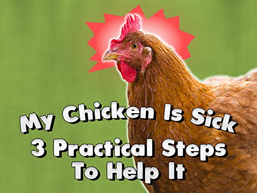 - My Chicken Is Sick: 3 Practical Steps To Help It