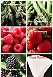 buy Organic New Bulk 2 Asparagus Seeds Survival Seeds 540+ Seeds Bonus Fruit Seeds Upc 650327337718 + 5 Plant Markers Jersey Mary Washington Raspberry Strawberry now, new 2018-2017 bestseller, review and Photo, best price $6.59