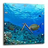 3dRose dpp_89954_2 Fish, Hawaii - US12 SWS0169 - Stuart Westmorland - Wall Clock, 13 by 13-Inch