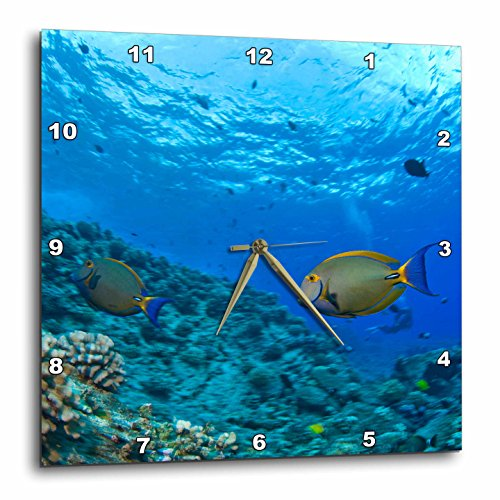 3dRose dpp_89954_2 Fish, Hawaii - US12 SWS0169 - Stuart Westmorland - Wall Clock, 13 by 13-Inch by 3dRose