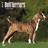 Bull Terriers Dogs Wall Calendar 2018 {jg} Best Holiday Gift Ideas - Great for mom, dad, sister, brother, grandparents, , grandchildren, grandma, gay, lgbtq.