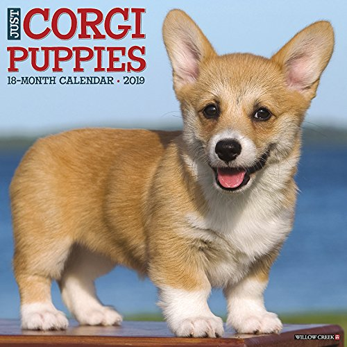 Just Corgi Puppies 2019 Wall Calendar (Dog Breed Calendar) ()