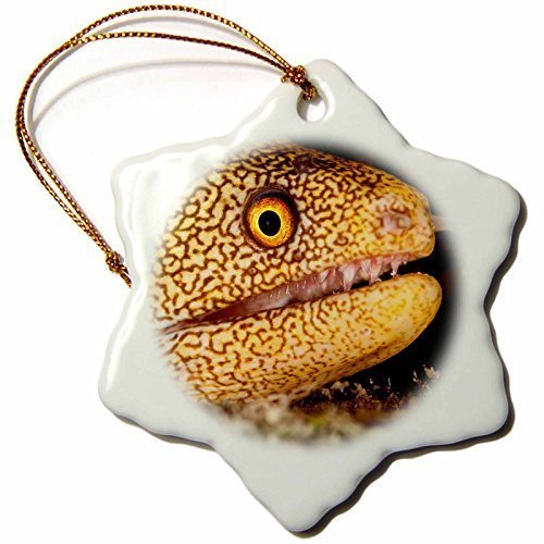 Tim Christmas Craft Tree Decorations Night Dive Photograph of Golden Tail EEL Off Bonaire Snowflake Christmas Ornament Porcelain Present (Tail Eel)
