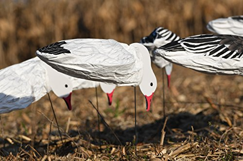 Dive Bomb Industries- S3 Snow Goose Decoys- very effective and realistic, used by pros (Snow Goose)
