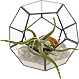 Mindful Design Glass Terrarium - Geometric Dodecahedron Desktop Garden Planter by (Black)