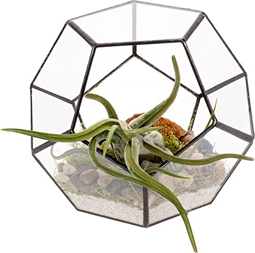 Mindful Design Glass Terrarium - Geometric Dodecahedron Desktop Garden Planter by (Black) by Mindful Design