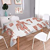 Anmaseven Human Anatomy Rectangle Printed Tablecloth Inner Muscle System Skin Structure with Cells Biology Health Medical Display Flannel Tablecloth Coral Grey Size: W70 x L104