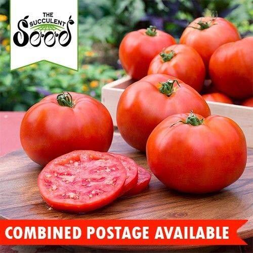 Go Garden Tomato - Big Boy (75 Seeds) Bulk Heirloom Large Fruit