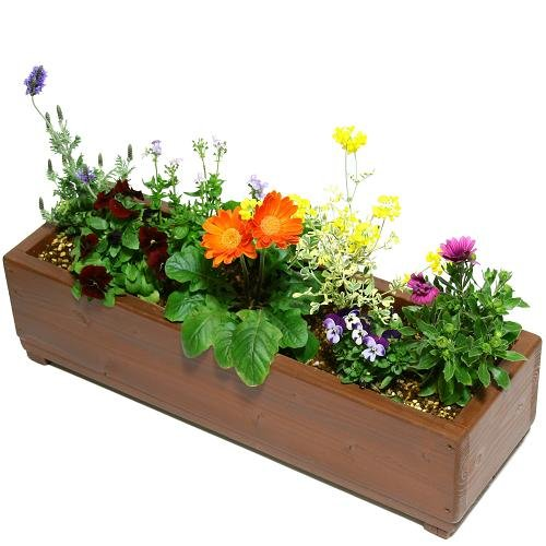 Welcome wood 木がやさしくお花を守るコンパクトプランター