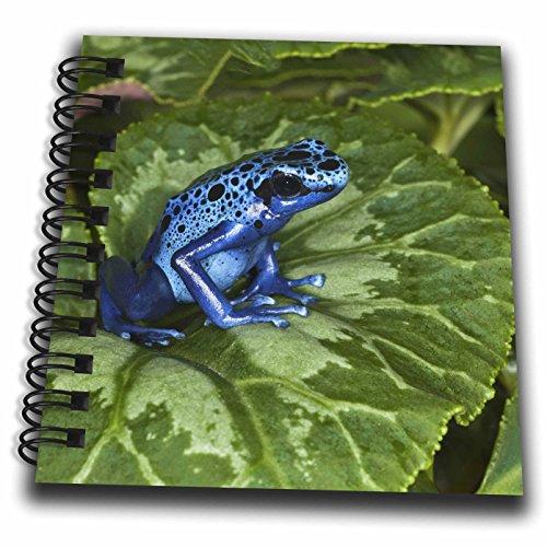 Frog Scrapbooking (3dRose db_87085_3 Blue Poison Dart Frog, Surinam-SA18 AJE0002-Adam Jones-Mini Notepad, 4 by 4