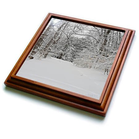3dRose TDSwhite - Winter Seasonal Nature Photos - Winter Weather Woodland Path - 8x8 Trivet with 6x6 ceramic tile (trv_285053_1) ()