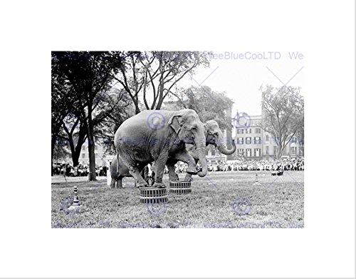 Vintage Circus Photos - 3