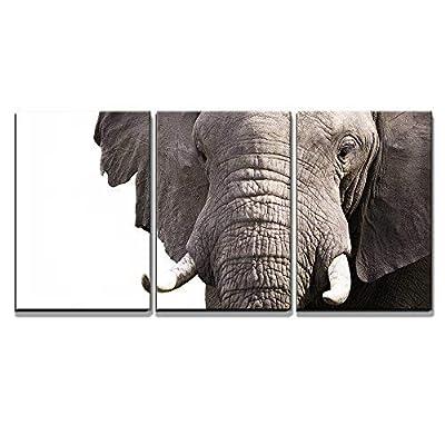 Elephant x3 Panels - Canvas Art