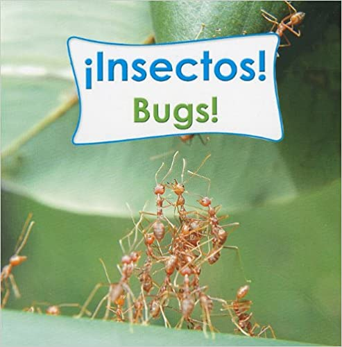Insectos!/Bugs! (Rourke Board Books)