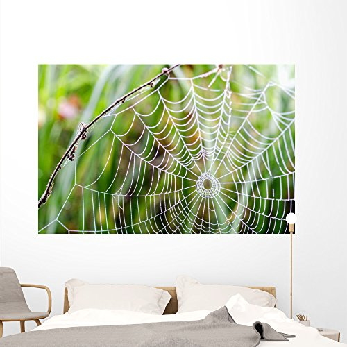 Spinnennetz Mit Morgentau Wall Mural by Wallmonkeys Peel
