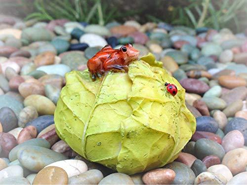 Dollhouse Mini Frog & Ladybug on Cabbage Miniature Magic Scene Supplies Your Fairy Garden - Outdoor House Decor ()