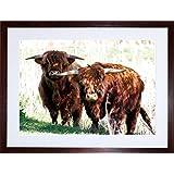PHOTO HIGHLAND COW FARM HORNS SCOTLAND FRAMED PRINT F97X3636