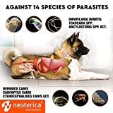 Flea & Worm Collar for Dogs – Flea Control and
