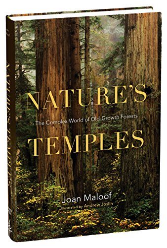 Nature's Temples: The Complex World of Old-Growth - Old Redwood Growth