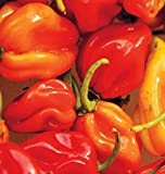 buy Habenero Hot Peppers Seeds (Super Hot), 25+ Premium Heirloom Seeds, 94% Germination, ON Sale!, (Isla's Garden Seeds), Non GMO, Highest Quality! now, new 2019-2018 bestseller, review and Photo, best price $5.99