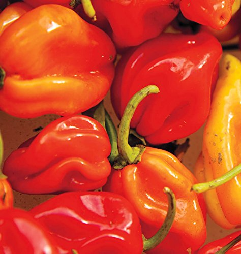 Habenero Hot Peppers Seeds (Super Hot), 25+ Premium Heirloom Seeds, 90-95% Germination Rates, Fun Addition to Your Home Garden!, (Isla's Garden Seeds), Non GMO, Highest Quality Seeds