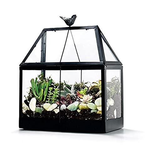Awesome Tabletop Greenhouse