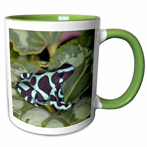 3dRose Danita Delimont - Frogs - Green and Black Dart Frog,