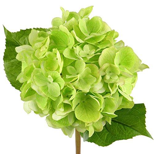 Rinlong Green Real Touch Hydrangea Silk Flower Stem for DIY Crafts Floral Arrangements Home Wedding Decor Bridal Bouquet(Green) (Arrangements Floral)