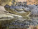 THE ALLIGATOR & AMERICAN CROCODILE