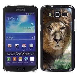 Paccase / SLIM PC / Aliminium Casa Carcasa Funda Case Cover para - Lion Beige Nature Savannah Animal King - Samsung Galaxy Grand 2 SM-G7102 SM-G7105