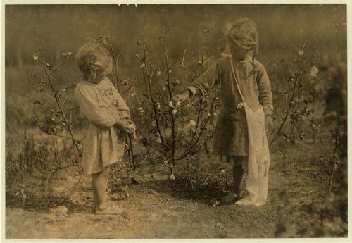 HistoricalFindings Photo: Cotton Pickers on Farm,Houston,Texas,Child Labor,Lewis Wickes Hine,1913