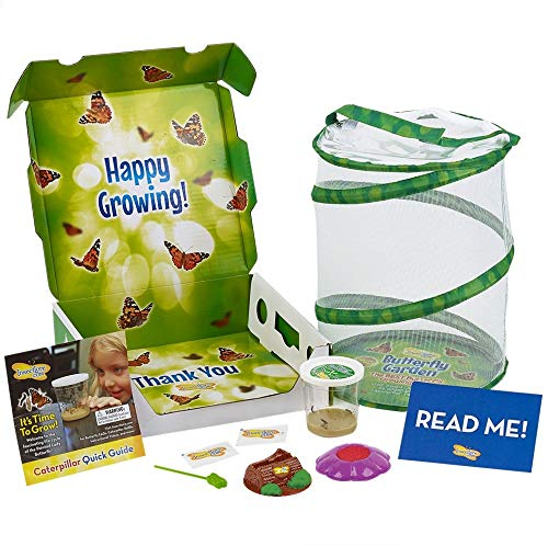 Insect Lore Butterfly Garden with Live Cup of Caterpillars (Hungry Caterpillar Days Of The Week Cards)