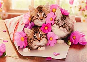 Amazon.com: Kitten Bouquet Avanti Funny Cat Birthday Card