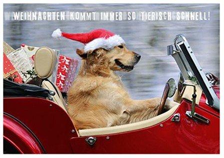 Weihnachtskarten Tiere.Postkarte Weihnachten Kommt Immer So Tierisch Schnell Amazon De