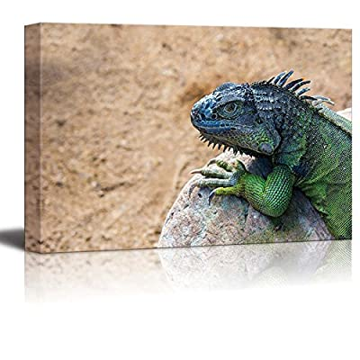 Canvas Prints Wall Art - Iguana Lizard on The Rock Wild Reptile Photograph | Modern Wall Decor/Home Decoration Stretched Gallery Canvas Wrap Giclee Print & Ready to Hang - 32