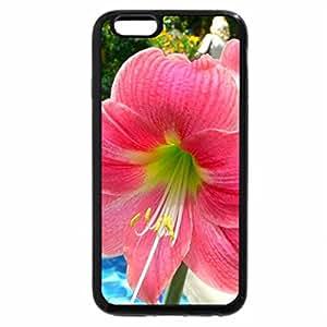 iPhone 6S Plus Case, iPhone 6 Plus Case, Beautiful Flower