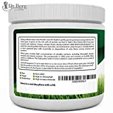 Dr. Berg's Wheat Grass Superfood Powder - Raw Juice Organic Ultra-Concentrated Rich in Vitamins & Nutrients - Chlorophyll & Trace Minerals - 60 Servings - Gluten Free Non GMO - 5.3 oz
