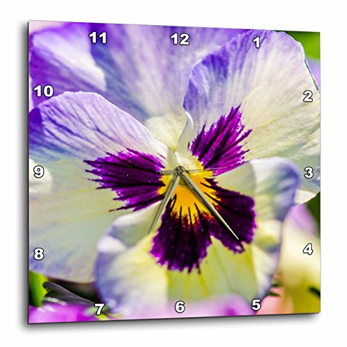 3dRose Alexis Photography - Flowers Pansy - Sunlit white, purple and yellow viola tricolor. Macro view - 15x15 Wall Clock (dpp_270609_3) -