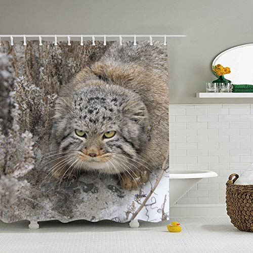 LOVEUIO Animal Pallas Cats Shower Curtain - Decorative Fabric Shower Curtain (72